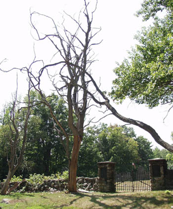 large tree next to a cemetery gate