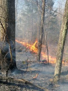 Fire spreading during Stoddard wildfire